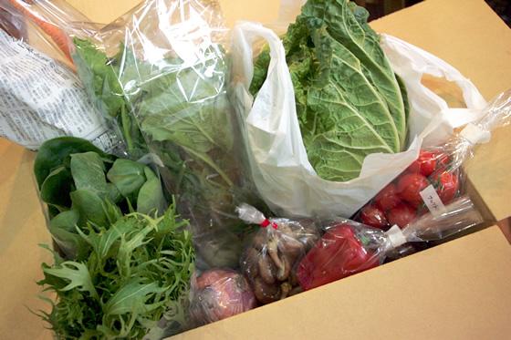 野菜の一例